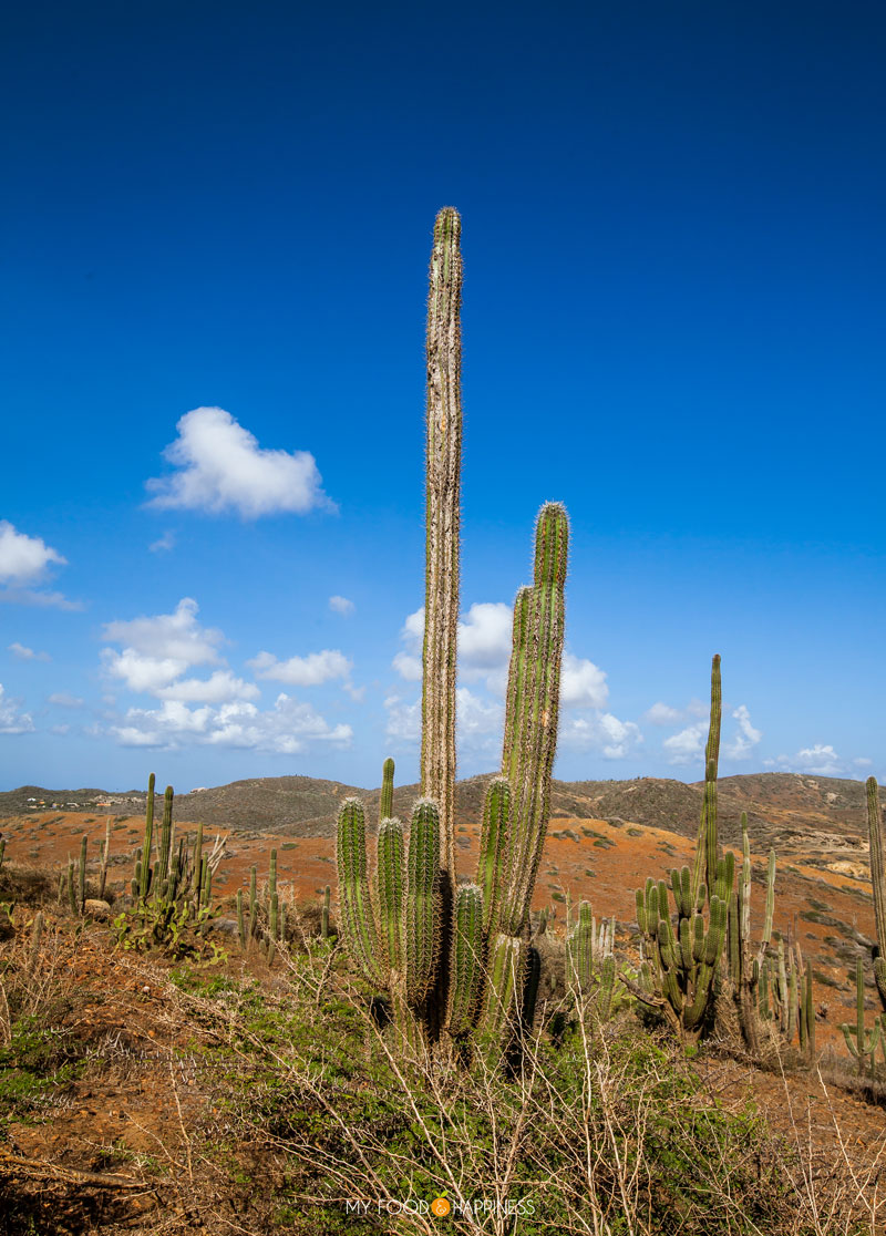An adventurous Aruba jeep safari, exploring the North coast of the island with Tequila! Boca natural pool, Bushiribana gold mines and the best snorkelling beach in Aruba are some of the stops of our tour.