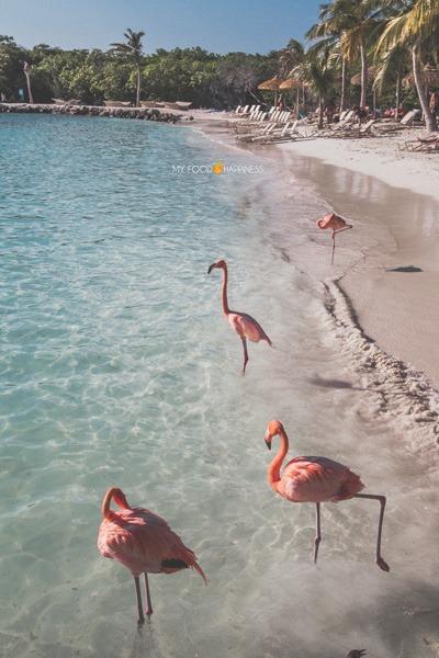 5 Reasons to visit Flamingo beach in Aruba (besides the flamingos)