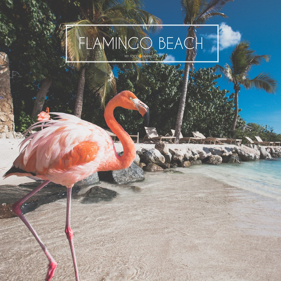Where is flamingo beach? This is your guide to Renaissance Island Aruba